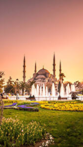 Картинки Турция Храм Парки Фонтаны Тюльпан Султанахмет Стамбул Мечеть Деревья Газон город