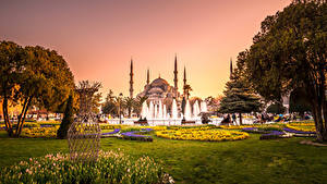 Картинки Турция Храмы Парки Фонтаны Тюльпаны Султанахмет Стамбул Мечеть Деревья Газон Города