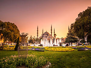 Картинки Турция Храмы Парки Фонтаны Тюльпаны Султанахмет Стамбул Мечеть Деревья Газон город