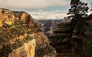Обои США Гранд-Каньон парк Парки Горы Каньона