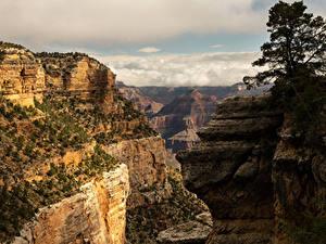 Обои США Гранд-Каньон парк Парки Горы Каньона Природа