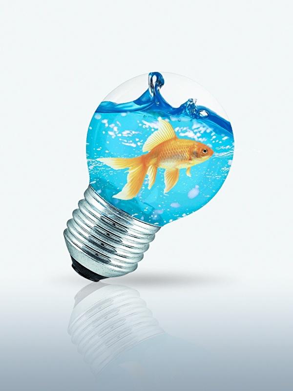 Картинки Рыбы Лампочка Креатив воде 600x800 для мобильного телефона лампа накаливания креативные оригинальные Вода