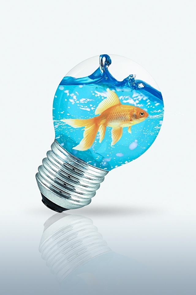 Картинки Рыбы Лампочка Креатив воде 640x960 для мобильного телефона лампа накаливания креативные оригинальные Вода