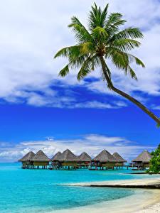Обои Бора-Бора Французская Полинезия Тропики Побережье Небо Пальмы Бунгало