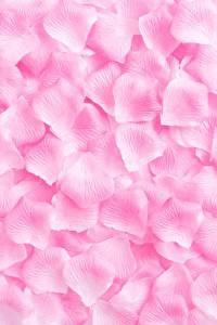 Обои для рабочего стола Текстура Розы Розовая Лепестки цветок
