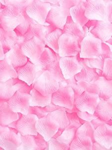 Фото Текстура Розы Розовая Лепестки