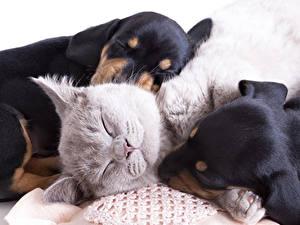 Фото Собаки Кошка Втроем Спит Милая животное