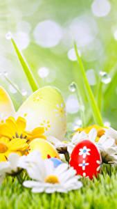Картинки Пасха Праздники Ромашка Яиц Капли
