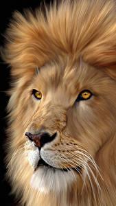 Фотография Львы Крупным планом Большие кошки Головы Усы Вибриссы Черный фон животное