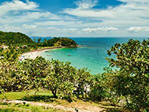 Картинки Португалия Тропики Берег Пляж Залива Кусты Madeira Природа