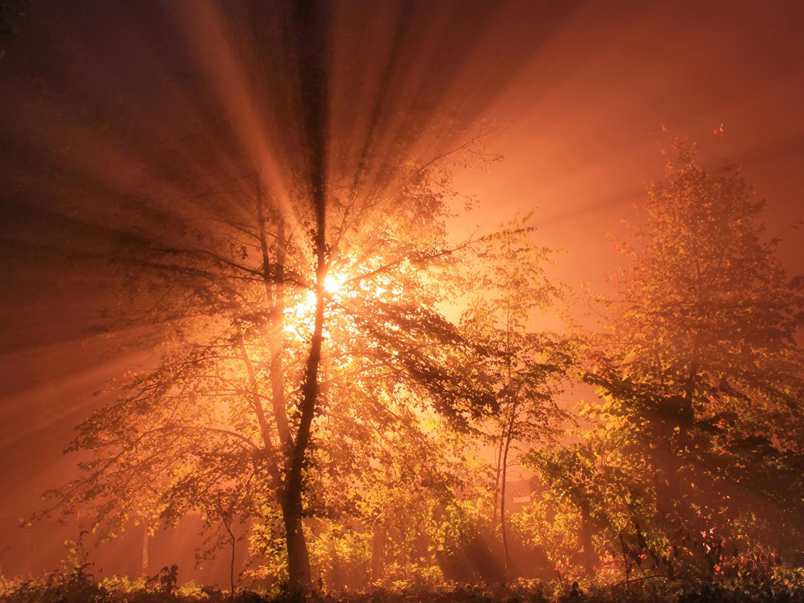 Обои для рабочего стола Лучи света Природа Небо рассвет и закат 1600x1200 Рассветы и закаты