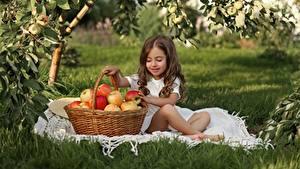 Фотография Яблоки Девочка Шатенки Сидящие Корзинка Дети