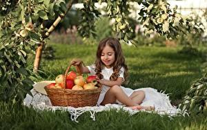 Фотография Яблоки Девочка Шатенки Сидящие Корзина ребёнок