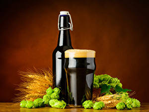 Обои Пиво Пшеница Хмель Бутылки Стакана Пене Колос Еда