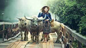 Фото Мосты Азиаты Быки Шляпа Рога Животные Девушки