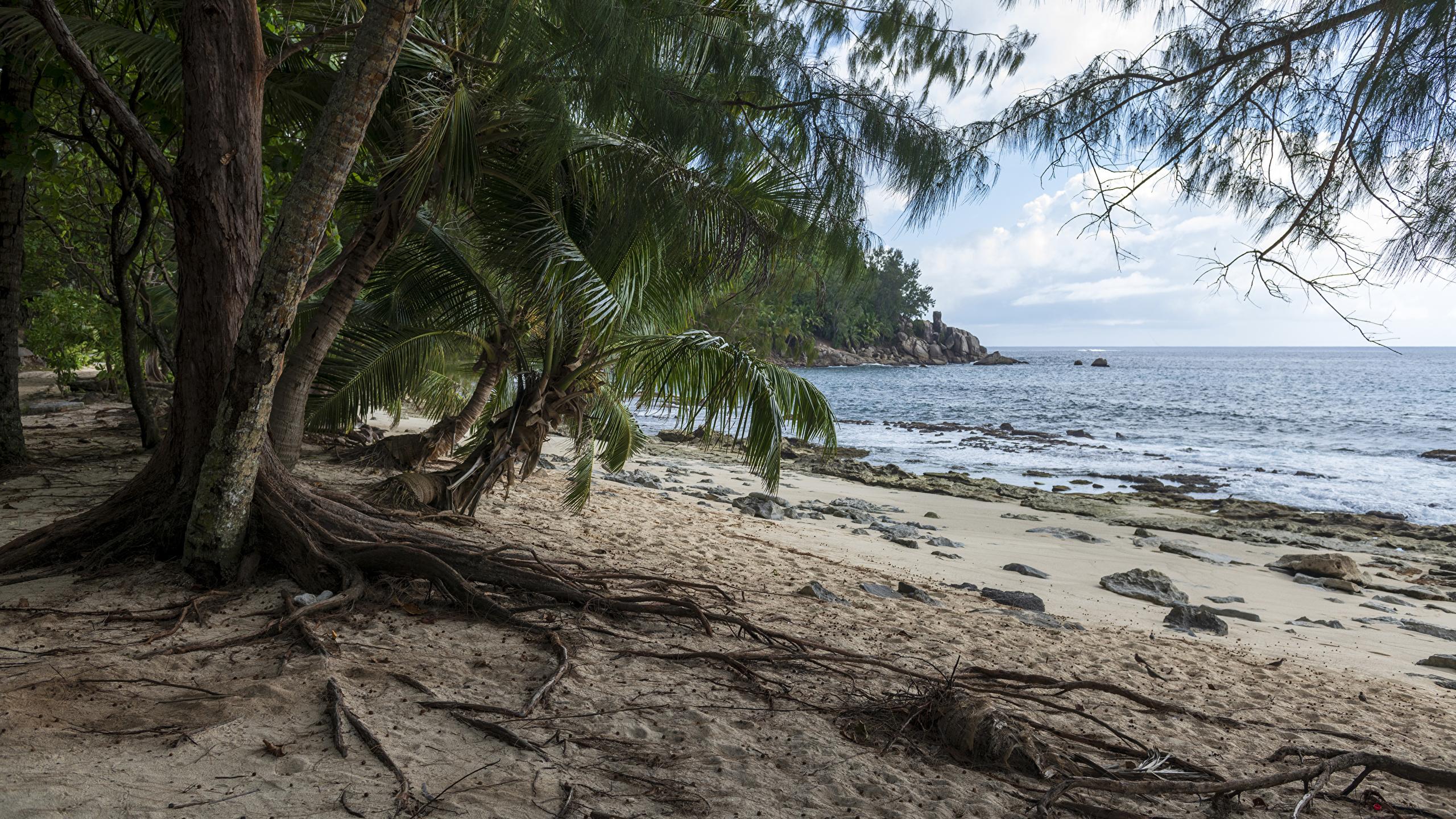 Картинка Police Beach Seychelles Пляж Природа Пальмы Тропики берег 2560x1440 Побережье