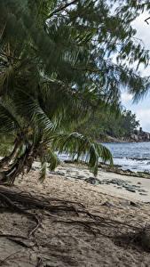 Картинка Тропики Берег Пальмы Пляж Police Beach Seychelles Природа