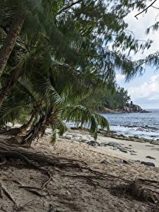 Картинка Тропический Берег Пальма Пляже Police Beach Seychelles