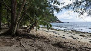 Картинка Тропики Берег Пальмы Пляж Police Beach Seychelles