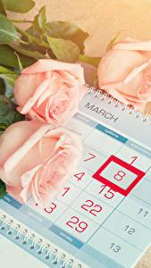 Фотография Праздники Международный женский день Розы Календаря Розовые Трое 3 цветок