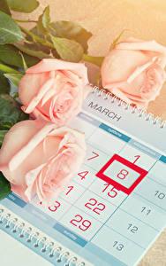Фотография Праздники Международный женский день Розы Календарь Розовый Трое 3 Цветы
