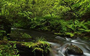 Обои Леса Камни Ручей Мхом Природа