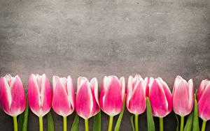 Картинка Тюльпаны Розовый Цветы