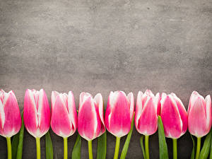 Картинка Тюльпаны Розовая Цветы