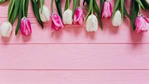Обои Тюльпаны Доски Цветы