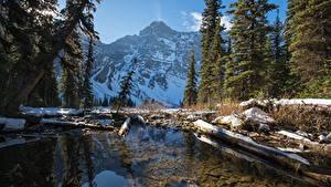 Обои Канада Парки Зима Гора Озеро Банф Ели Бревно Снег Природа