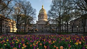 Фотография США Дома Тюльпаны Дворца Уличные фонари Virginia Capitol город
