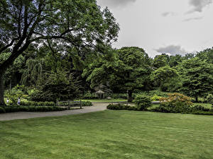 Фотография Великобритания Парк Газон Деревья Кусты Garden Harlow Carr Природа