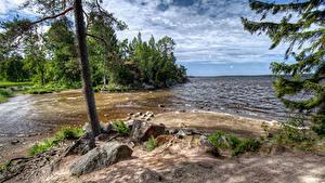 Картинки Россия Парки Берег Камни Деревья Park Monrepos Vyborg Природа