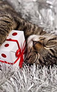 Картинки Кошка Рождество Подарков Спит Кубик