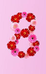 Фотографии 8 марта Герберы Цветной фон цветок