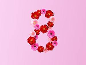 Фотографии 8 марта Герберы Розовый фон цветок