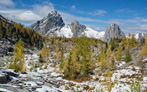 Фотографии Канада Парки Горы Зима Банф Снеге Ель Природа