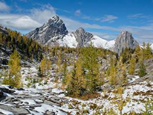 Фотографии Канада Парки Гора Зима Банф Снеге Ель Природа