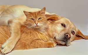 Фотографии Кошки Собака 2 Животные