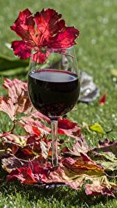 Обои Вино Бокалы Трава Лист