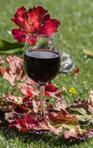 Обои Вино Бокалы Трава Лист Еда