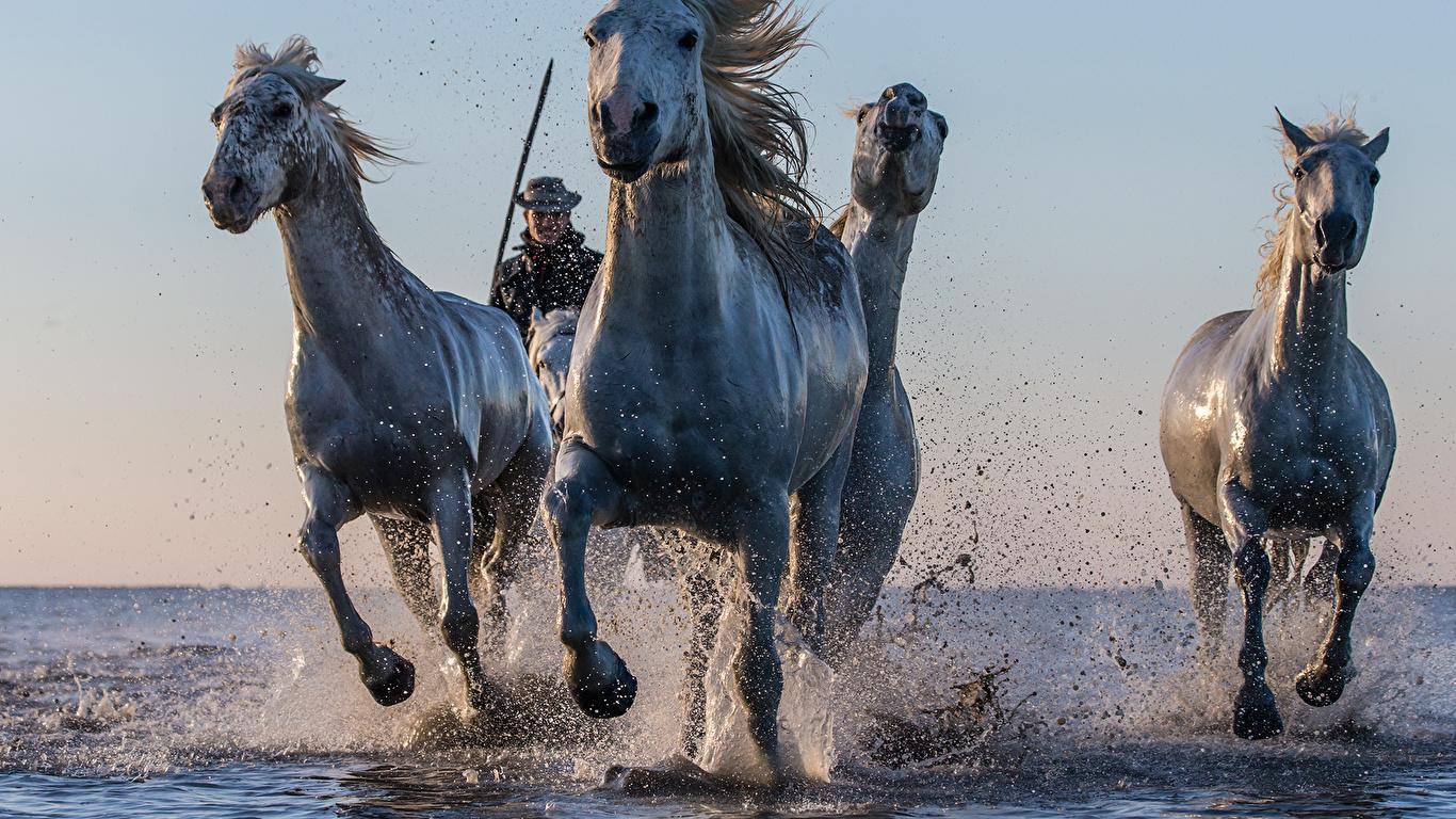 Смотреть лошади фото