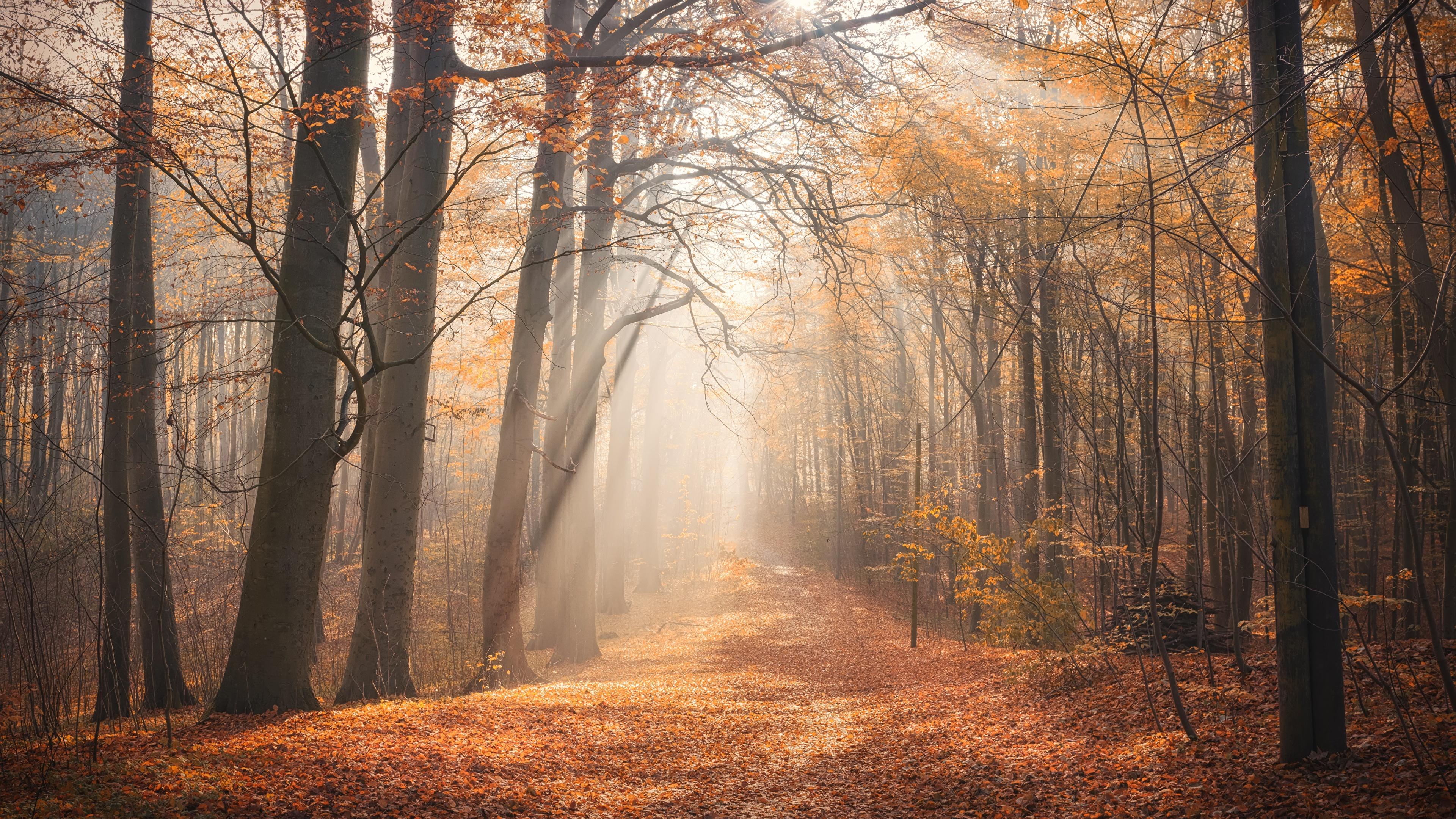 солнце лощина деревья осень смотреть
