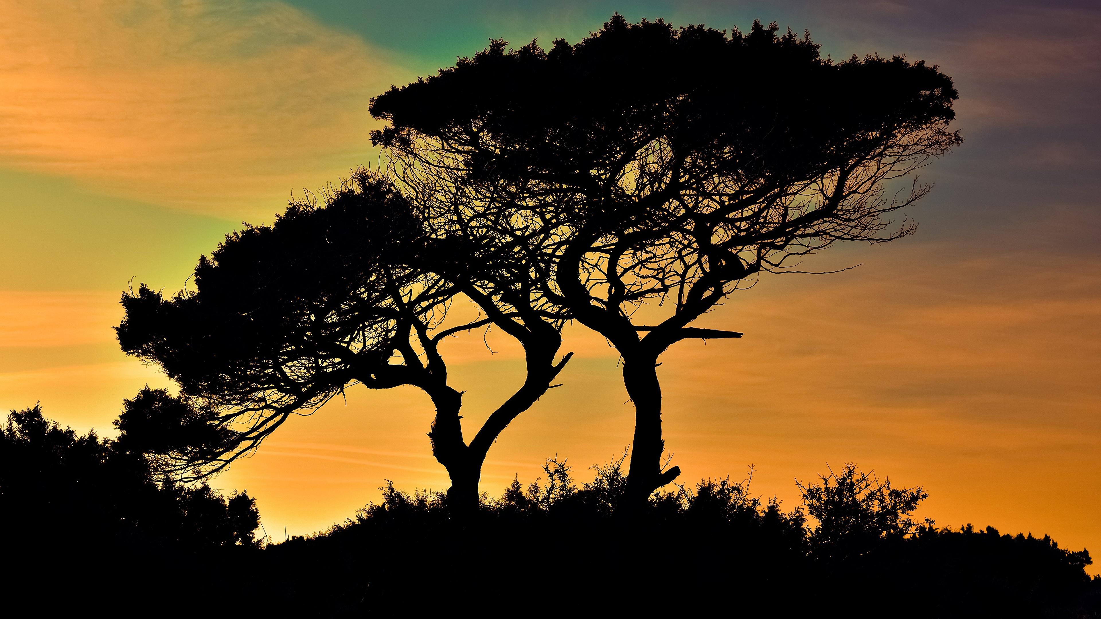 Фото Республика Кипр силуэты Cavo Greco Природа Деревья 3840x2160 Силуэт силуэта дерево дерева деревьев