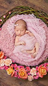 Фото Розы Корзина Младенец