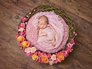 Фото Розы Корзина Младенец Дети