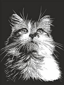 Картинка Кошки Рисованные Усы Вибриссы Взгляд Черно белое На черном фоне Животные