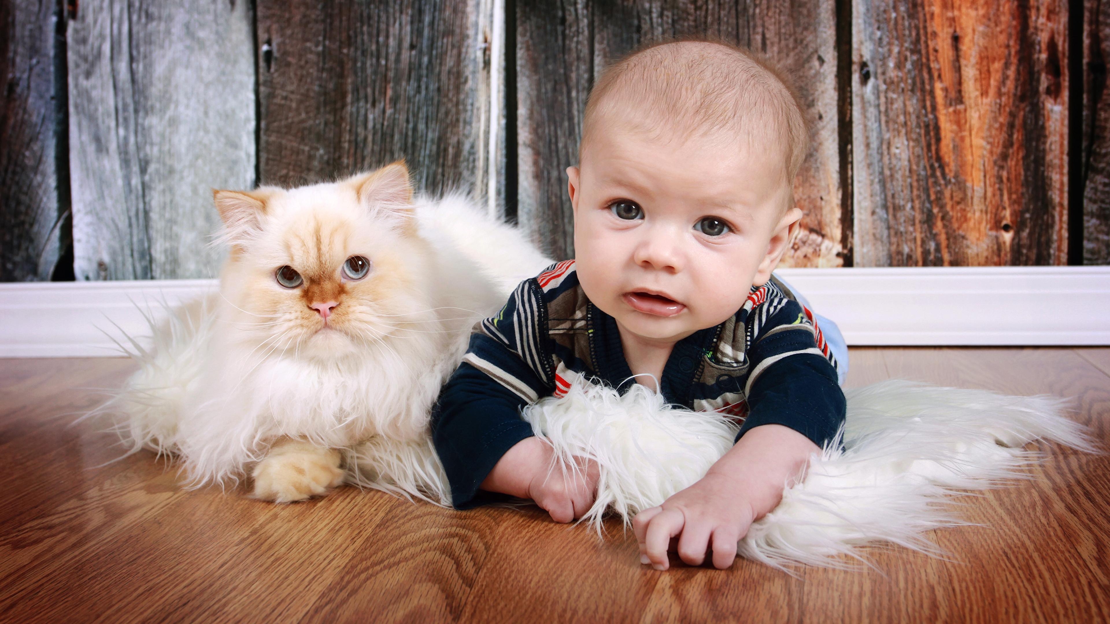 Фото кошка Младенцы Дети Взгляд Животные 3840x2160 кот коты Кошки младенец младенца грудной ребёнок ребёнок смотрит смотрят животное
