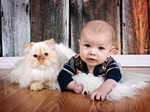 Фото Коты Младенцы Взгляд Дети Животные