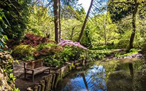 Фотография Великобритания Парки Пруд Деревья Скамья Кустов Clyne Gardens Swansea Природа